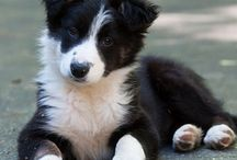 Puppys ❤❤