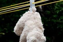 teddy bear (mackók)