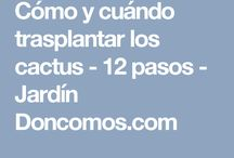 plantas-cactus
