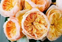 Flower Varieties {Orange Flowers} / Gorgeous orange flower inspiration for your wedding.