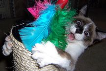 Cats and toys....nuff said. / Feather wands, crinkle balls, fuzzy mice.  You name it, we got it.