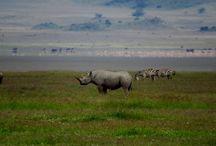 Área de Conservación de Ngorongoro / Fotografías de Udare o facilitadas por los viajeros