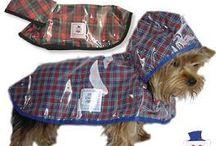 psia odzież