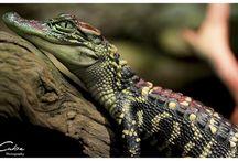 Cool Reptiles & Amphibians