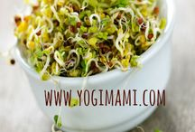 Healthy Sprouting / Everything about the healthy benefits of sprouting beans, grains, legumes, recipes, tips, etc