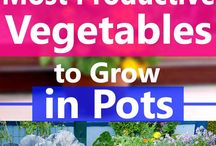 veggies in pots