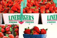 Farmstand: Fresh Food & Recipes