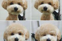 Pupper Doggo