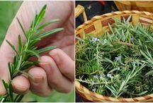 ( Foodie In Me - Herbs }
