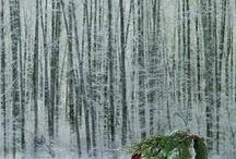 Winter e-session
