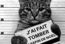 Chats fous