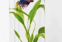 Aquarium & fish pod