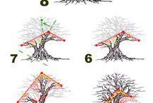 Bonzai ağaçlar