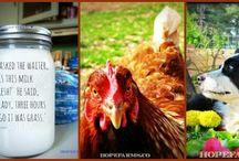 Farm Blogs / by Patricia Gibson
