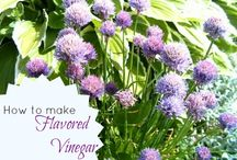 From My Herb Garden / by Loretta Fauchier