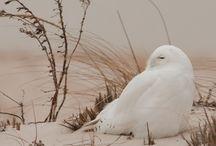 Birds / by Jill Moosekian