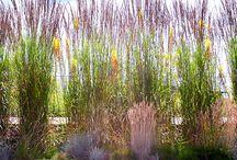 Zahrada RD Kokonín