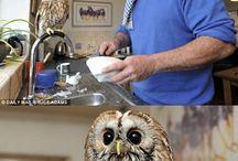 Owls♡