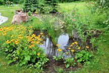 Rain Garden / Waterswale