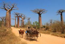 Afryka / Czarny ląd w najpiękniejszych, kolorowych barwach