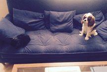 Já A Moje Zvířátka Králíček Bobíček A Pejsek Charlie/Me And My Rabbit Bobíček And Dog Charlie / Můj Pejsek Charlie A Můj Králíček Bobíček/My Dog Charlie And My Rabbit Bobíček