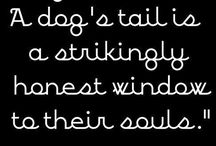 Why I like dogs more than people