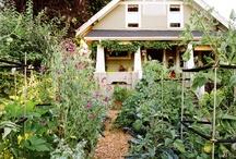 gardening / by Dana Swogger