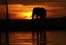 The Majestic Elephant