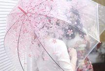 Cherry Blossom yes!