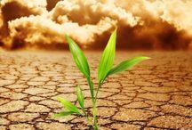 Food & Environment