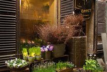 цветочные магазины, цветы