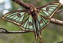 Butterflies / by C C