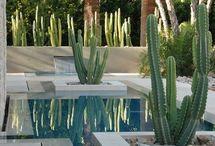Rośliny Hiszpania
