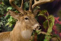 Northwoods Wildlife / Inspiring Northwoods wildlife, beauty in nature from The Wilderness Reserve