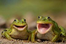 Laughting animals