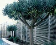 plants n trees