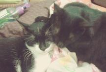 YELLOW + KAI / meow!