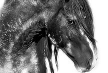 my passion for the horse.....beautiful