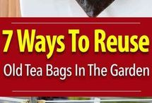 Tea Bags re-use