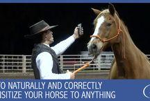 Hästträning