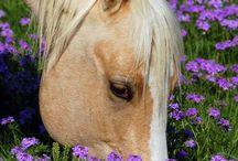 névnapra lovas képeslap
