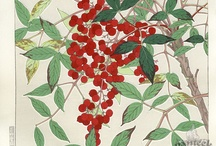 Shodo Kawarazaki / (1889 - 1973) Kawarazaki Shodo is best known for designing woodblock prints of flowers and other plant life. First edition Shodo woodblock prints have the date stamped in Japanese in the lefthand margin. Born in Kyoto, Shodo studied the art of yuzen dyeing, a traditional art craft in Kyoto, under the guidance of Yamamoto Sekkei. He also studied Japanese painting under Shibahara, though it was his teacher Kishyo who helped cultivate Shodo's original style of expression.