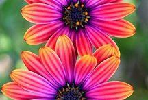 minhas flores minhas cores