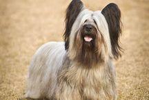 Révisions zootechnie canine - Races de chiens / L'enseignement de zootechnie est une partie importante de la formation d'Aide-soignant Vétérinaire.  Saurez-vous reconnaitre ces races canines ?