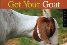 Goats Galore / by Ann Knecht