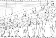 La figura humana /  Láminas de músculos y huesos de diferentes artistas, realizadas desde el siglo XVII