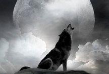 Ptit loup...