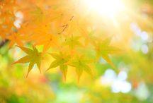 Autumn feat. NUXE / NUXE célèbre l'automne, ses jolies couleurs et ses instants cocooning à partager.