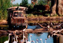 Jungle Safari in Corbett / Safari is a very thrilling adventure to see creature of nature. www.sollunaresort.com/safari.html