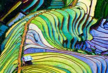 RICE FIELDS AND TERRACES